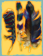Alaskan Feathers by Meg Robinson